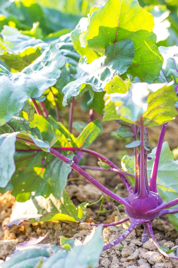 Taste of Home - Kohlrabi | happyfoodstube.com