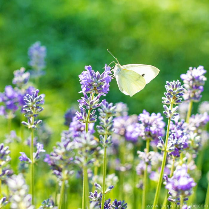 Taste of Home - Lavender & Butterfly ❤ | happyfoodstube.com