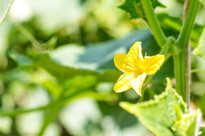Green Gardening | happyfoodstube.com